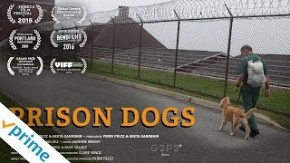 Prison Dogs | Trailer | Available Now