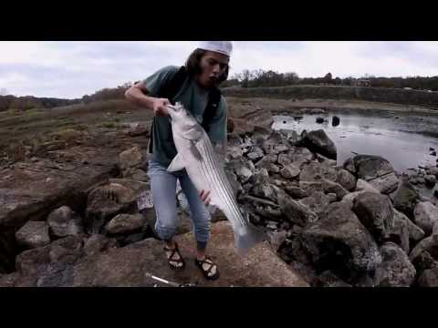 Catching MONSTER Striped Bass Lake Whitney and Brazos River FIshing