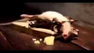 mouse trap workout..3gp