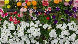 Grow Flower plant in a little space (with english subtitle)