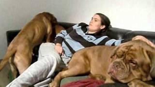 Maja und Elmo beim Couchkampf