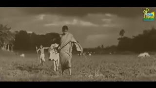 Teaser of Pather Panchali - Satyajit Ray