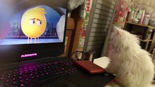 persian kitty watching movie animation