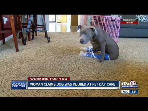 Xxx Mp4 Woman Claims Dog Was Injured At Pet Daycare 3gp Sex