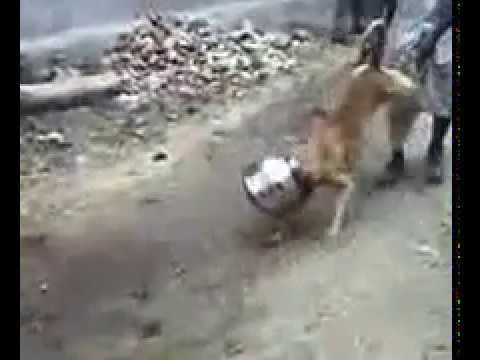 Xxx Mp4 Rajsthani Dog Is Fails 3gp Sex