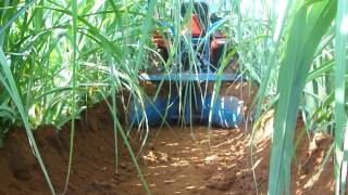 Removing unwanted weeds in the sugarcane field(Weed Control by P.K.Jayakrishnan)