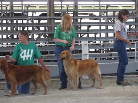 4-H Dog Show 7-13-08