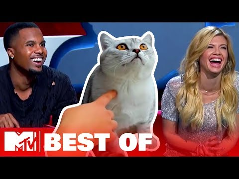 Ridiculousnessly Popular Animal Videos 😺 AloneTogether