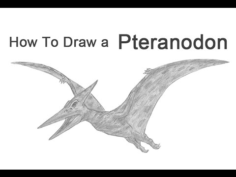 How to Draw a Pteranodon Pterodactyl