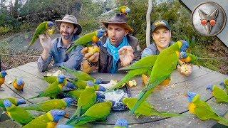 Parrots Crash our Picnic! - in VR180!