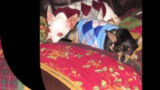 LOYAL RESCUE FOSTER DOGS MOVIE-SLIDESHOW
