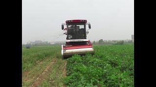 Green Bean Harvester  Long Bean Harvest machine Modern Farming