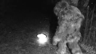 Bigfoot Captured,  All Caught on video 12/2016