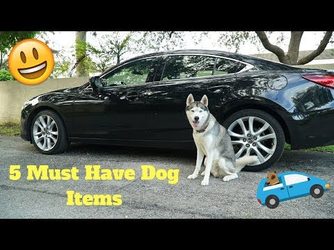 5 Dog Items To Have When Driving With Your Dog