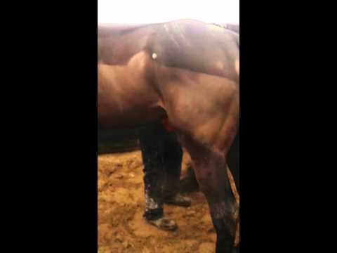 Xxx Mp4 Man Washes Horses Willy 3gp Sex
