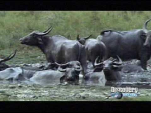 Xxx Mp4 Asia Salvaje Documental Discovery Channel 3gp Sex