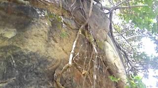 tree in rock.3gp