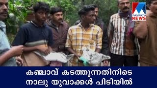 Four youths held for peddling ganja | Manorama News