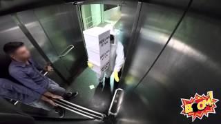 Broma abejas ascensor