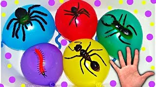 Water Balloons with Insects for Learning Colors - Finger Nursery Rhymes For Babies
