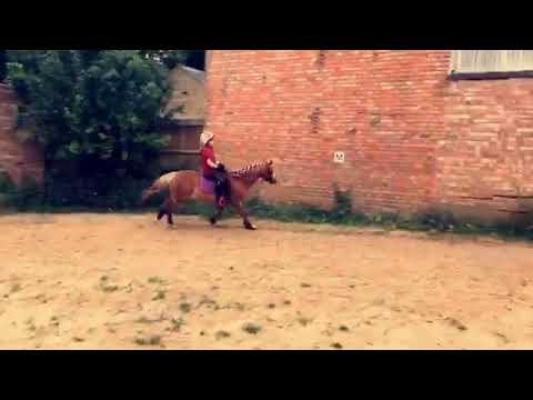 Xxx Mp4 Horsey Girl Xxx 3gp Sex
