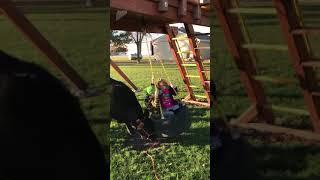 Cow pushing kids on tire swing