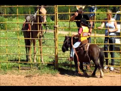 Montarias Losnak Bauru Cavalos
