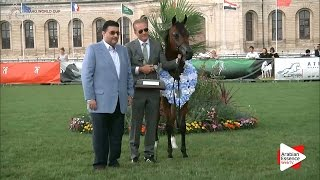 SILVER - N.55 IMHOTEP RACH - Chantilly 2016 World Cup - Yearling Colts Championship (Class 14)