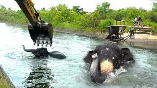 A dam tried to swallow an elephant, humans said otherwise