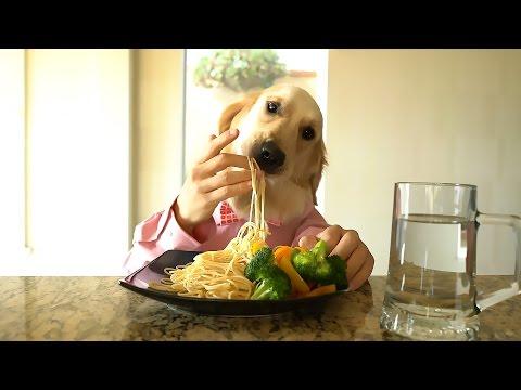 Xxx Mp4 Chef Dog 3gp Sex