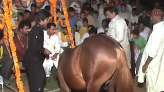 gochh horse dance shadi ch shani