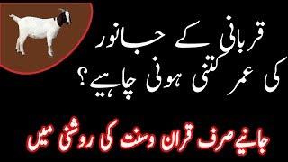 Qurbani ka janwar kaisa hona chahiye in Urdu Hindi|Qurbani ka janwar k age  masla