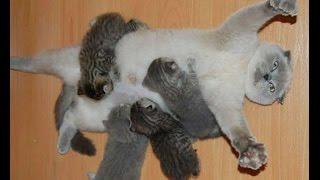 Amor de Madre. Si no dices OHHHHH... NO TIENES CORAZON! Los gatitos mas lindos