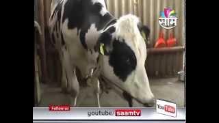 Dairy farming success story of Annasaheb Mane