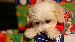Christmas Puppy Surprise Compilation NEW