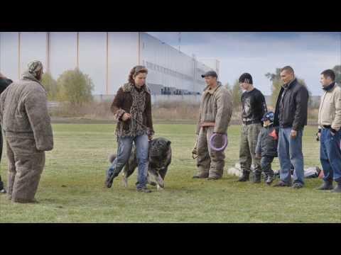 Чемпио� ат Украи� ы ра� га САСТ Охра� � ая собака А все породы 05.10.2013.