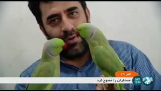 Iran Tehran Birds market, Azadegan Expressway بازار پرندگاه بزرگراه آزادگان تهران ايران