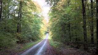 Wolfgang Gsell - The Immortal Spirit • Der unsterbliche Geist