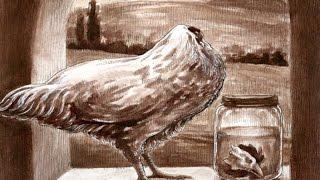 قصة الدجاجة المعجزة , التى عاشت بدون رأس .. !!