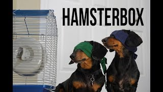 Ep 1. HAMSTER BOX - Funny/Scary Dog Video! (Dog Version of Bird Box!)