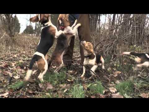Harrison County Rabbit Hunt