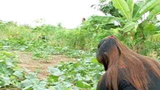 Bujang Keling Kenyalang James jacob selat