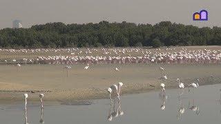 UAE - Flamingos in Dubai