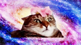 Cat Flower Shooting Stars Edition
