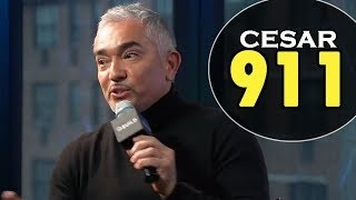CESAR MILLAN about CESAR 911 episodes on Nat Geo WILD | Interview February 04, 2016