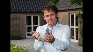 Top 10 racing pigeon from Jos Thone | BD Pigeon Paradise