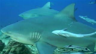 Fear of Sharks Spurs Innovation in Australia