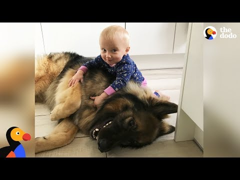Xxx Mp4 Big Dog Loves His Little Baby Girl The Dodo 3gp Sex