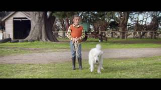 Oddball  - Official Trailer