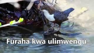Bwana anakuja